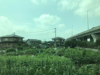 gyouda_kuma.JPG